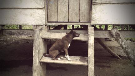 Dogtired